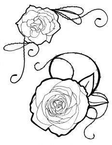 Prosta róża