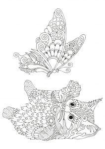 Motylek i kotek