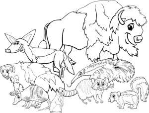 Bizon i inne zwierzęta z Ameryki