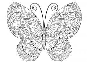 Motylek dla dorosłych