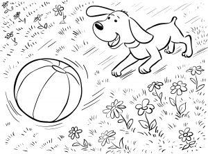 Pies i piłka