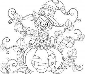 Kotek i dynia Halloween
