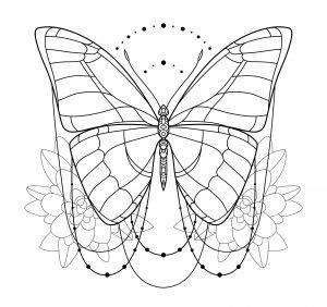 Motylek w ruchu