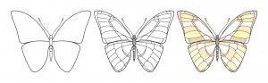 Pokoloruj motylka wg wzoru