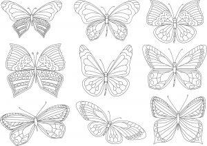 Różne motylki