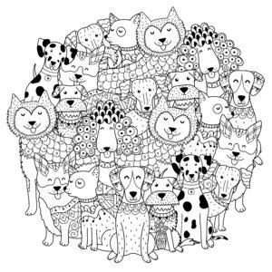 Różne gatunki psów