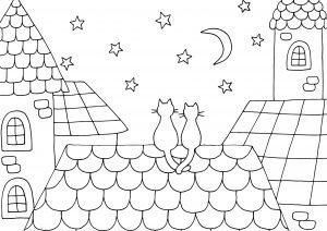 Kotki i nocne niebo