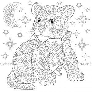 Tygrysek i gwiazdy
