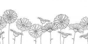 Inne kwiaty