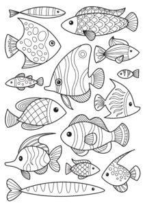 Zestaw rybek