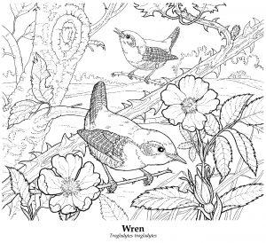 Strzyżyki i kwiaty