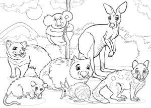 Miś koala, kangur i zwierzęta z Australii