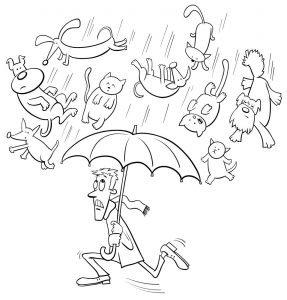 Deszcz kotków i psów