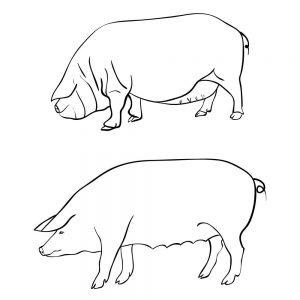 Dwie świnki