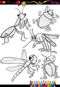 Modliszka, komar, ważka i żuk