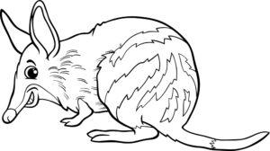 Jamraj (bandicoot)
