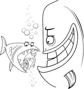 Ryby różnej wielkości